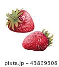 水彩画 いちご イチゴのイラスト 43869308