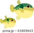 草河豚 親子 河豚のイラスト 43869643