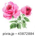 花 薔薇 ピンクのイラスト 43872884