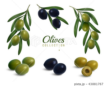 Realistic Olives Branches Set 43881767