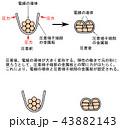 圧着の原理 43882143