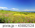 風景 棚田 花の写真 43882528