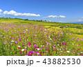 風景 棚田 花の写真 43882530
