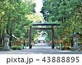 宮崎神宮 神社 鳥居の写真 43888895