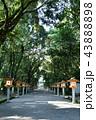 宮崎神宮 神社 鳥居の写真 43888898