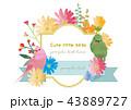 インコ 小鳥 鳥のイラスト 43889727