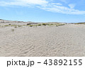 中田島砂丘 43892155