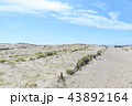 中田島砂丘 43892164