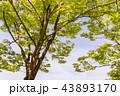 樹 43893170