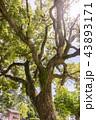 樹 43893171