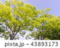 樹 43893173