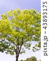 樹 43893175