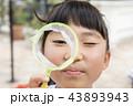 お祭りイメージ ポイを覗く子供 43893943