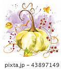 かぼちゃ カボチャ 南瓜のイラスト 43897149