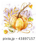 かぼちゃ カボチャ 南瓜のイラスト 43897157