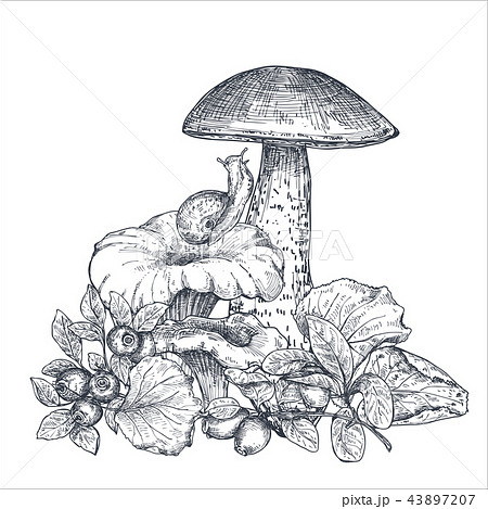 Vector composition of hand drawn forest mushrooms with fall leaves, snail, cranberry 43897207