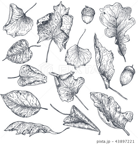 Vector collection of hand drawn dry autumn leaves 43897221