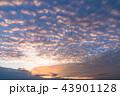 空 雲 うろこ雲の写真 43901128