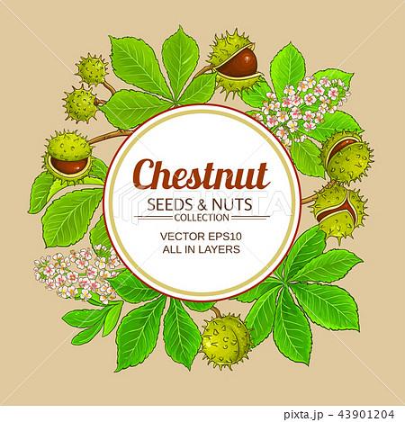 chestnut vector frame 43901204