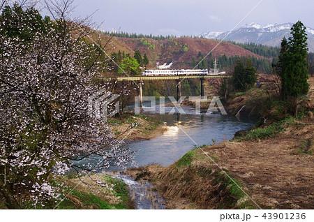 只見線 破間川の桜(キハ40) 43901236