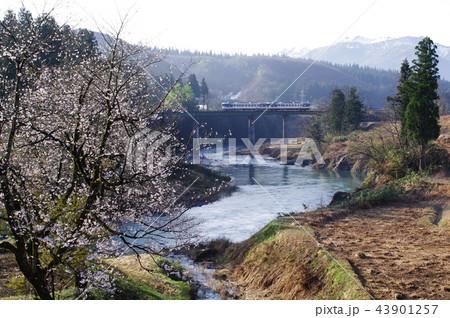 只見線 破間川の桜2(キハ40) 43901257