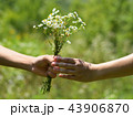 Hands of man and girl with bouquet of daisies 43906870