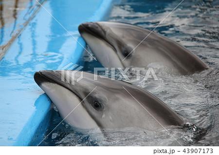 のとじま水族館 43907173