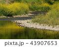春 花 植物の写真 43907653