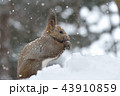 雪の日 43910859