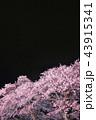 春 花 桜の写真 43915341