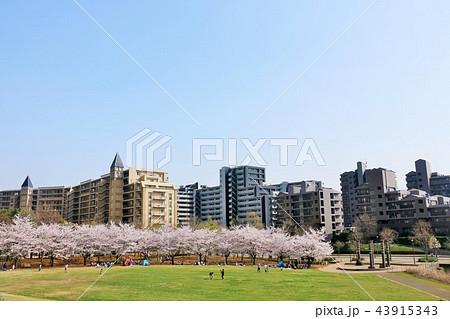 マンション街と桜のある公園 43915343