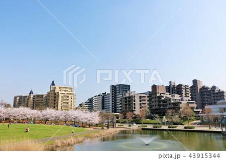 マンション街と桜のある公園 43915344