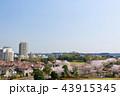 春 桜 街並みの写真 43915345