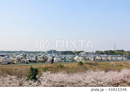 住宅街と桜並木 43915346