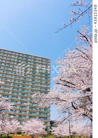 桜とマンション 43915349