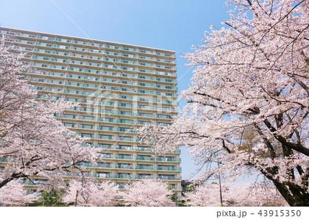 桜とマンション 43915350