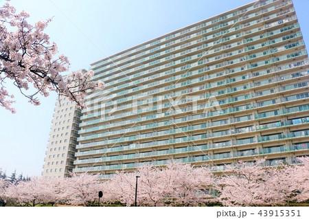 桜とマンション 43915351