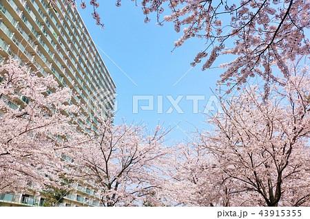 桜とマンション 43915355