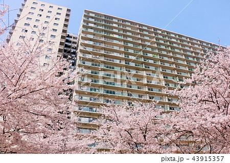 桜とマンション 43915357