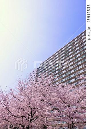 桜とマンション 43915358