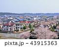 春 桜 街並みの写真 43915363