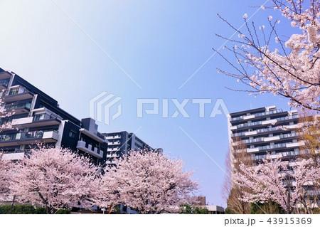 春のマンション街 43915369
