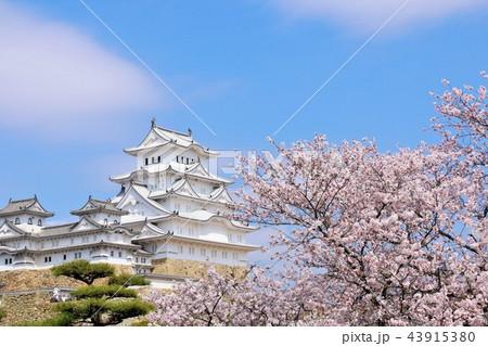姫路城と桜 43915380