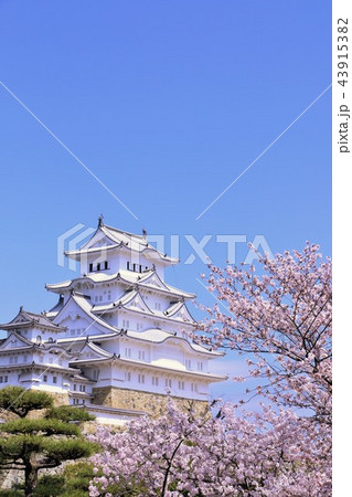 姫路城と桜 43915382