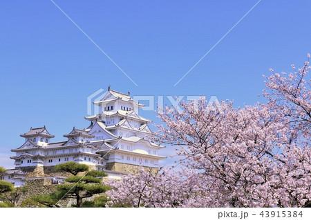 姫路城と桜 43915384