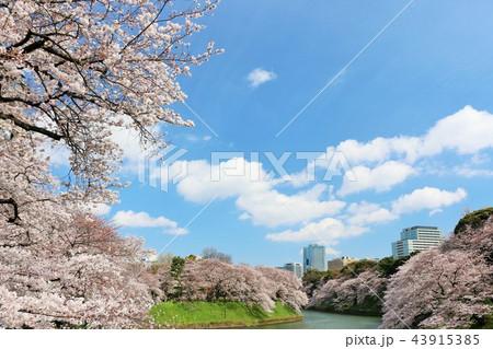 東京 千鳥ヶ淵の春 43915385