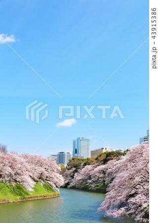 東京 千鳥ヶ淵の春 43915386