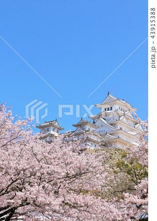 姫路城と桜 43915388