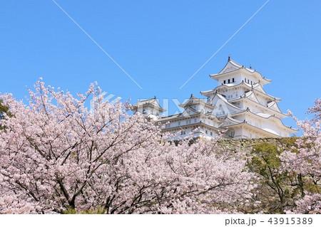 姫路城と桜 43915389