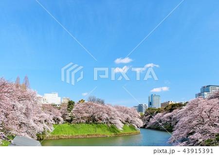 東京 千鳥ヶ淵の春 43915391